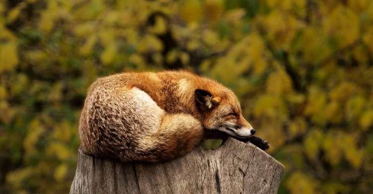 Abschalten mit Gedankenstopp sorgt für Entspannung und Schlaf – Zeit-Spar-Tipp Nr. 13